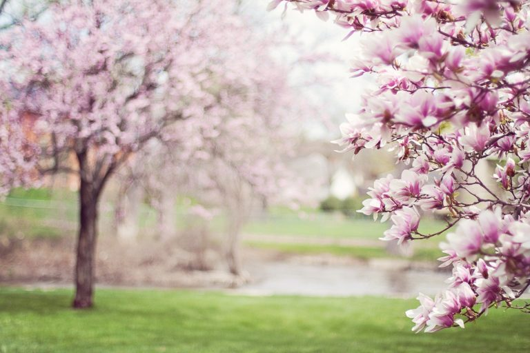 Mindful Spring!