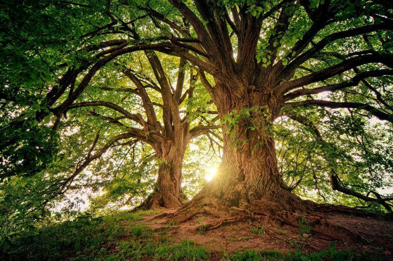 Yogi Trees!